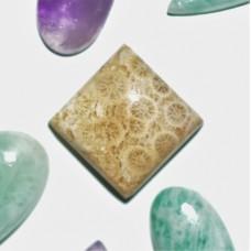 Fossil Coral 15mm Square Cabochon